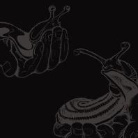 slug-comparison-logo_album-012_no-logo.jpg